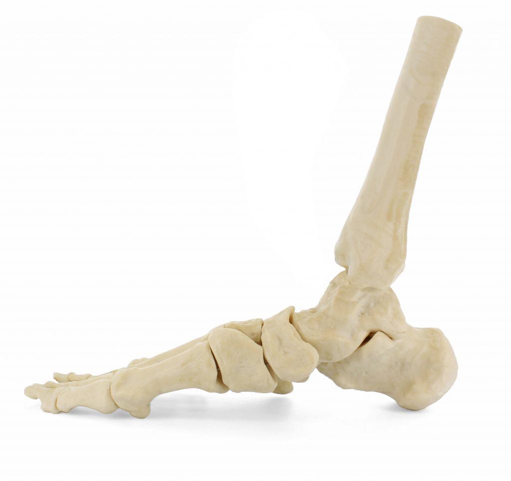 Medial Foot 2