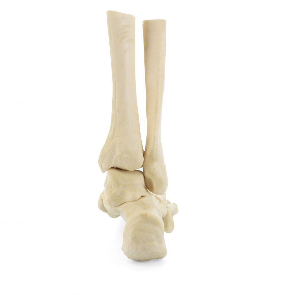 Posterior Foot